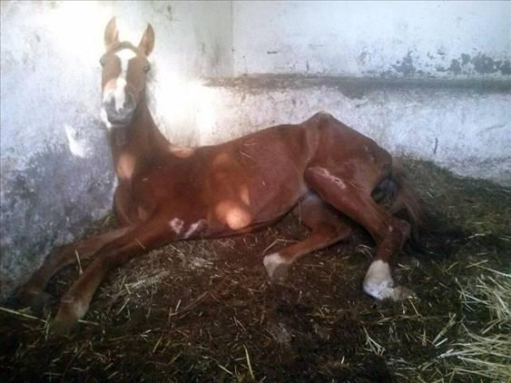 Dos caballos en descomposición y más de 40 malnutridos en un club hípico de Okondo (Álava)