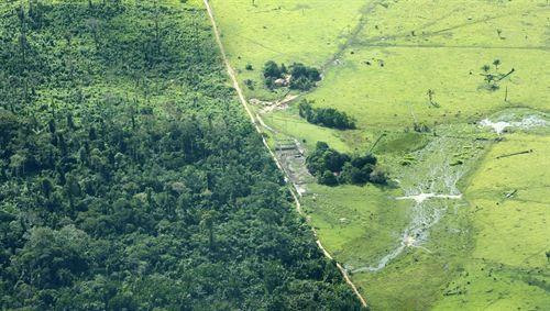 Las áreas protegidas de Amazonía, más eficaces que las sostenibles contra la deforestación