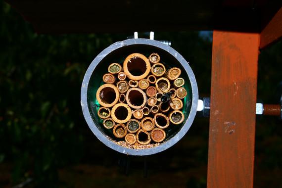 Todos los 'secretos' de las abejas solitarias
