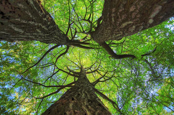 El misterio del árbol amazónico desconocido por fin resuelto