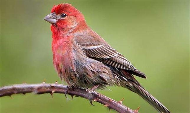 Los pájaros cantan con el mismo control vocal que los humanos