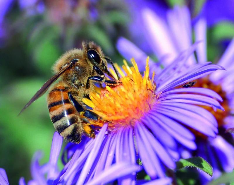 Los pesticidas 'arrasan' las colonias de abejas y abejorros