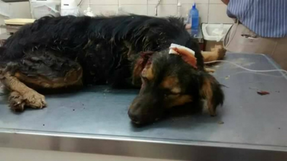 Argentina: Le partió la cabeza a un perro y lo enterró vivo en Corrientes