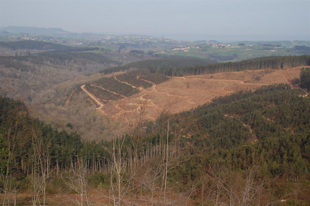 NO al eucalipto en el Norte de España