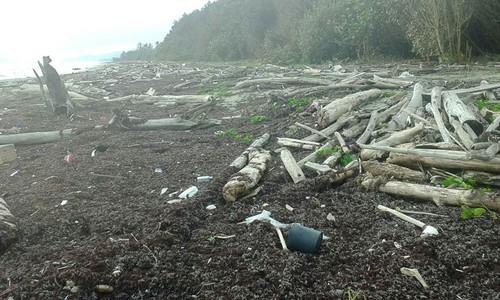 ¿Qué tiene que ver la deforestación de bosques tropicales y la reproducción de la tortuga laúd?