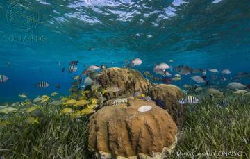 Ecosistemas costeros, los que más carbono capturan