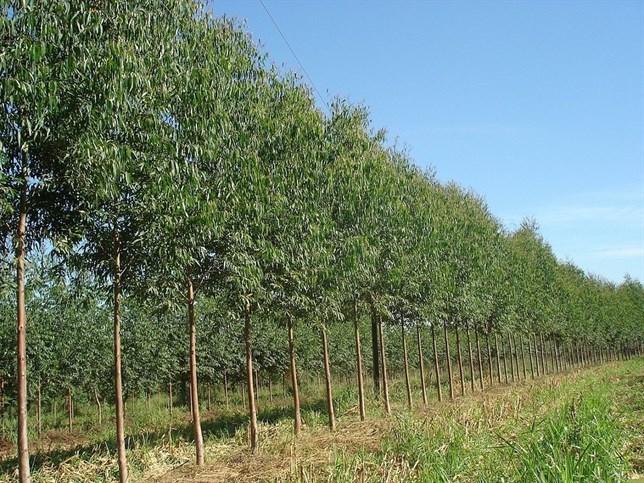 Compensar CO2 con plantaciones 'fulminaría' los ecosistemas naturales