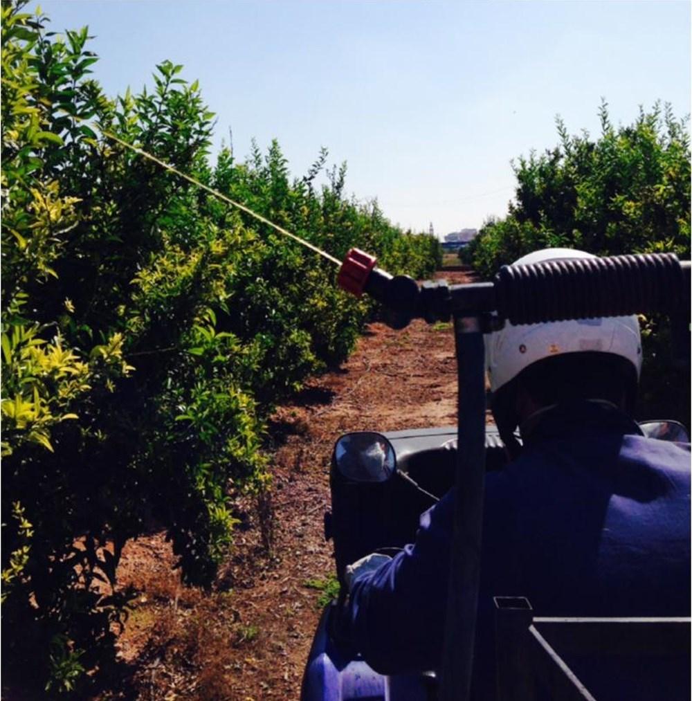 La Generalitat inicia los tratamientos terrestres contra la mosca de la fruta en zonas citrícolas y de caqui