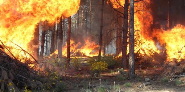El Consell propone sanciones más duras en materia de incendios forestales y plantea la obligación de reparación del daño