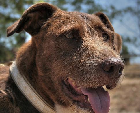 ParkSpark Project: alumbrado público con caca de perro
