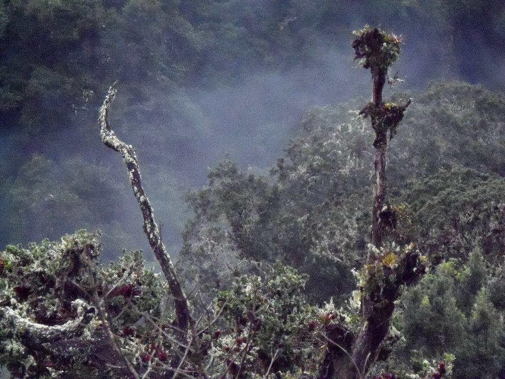 Bosques ticos encantan a franceses, indios y gringos… ¿Los disfruta usted?