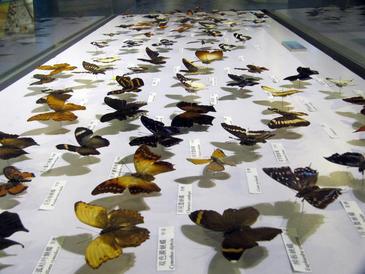 Las colecciones privadas de historia natural son una fuente de material científico