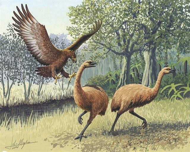 Vinculan aves no voladoras extintas en Australia, América y Europa