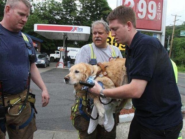 Este perro guía salva la vida a su dueña ciega