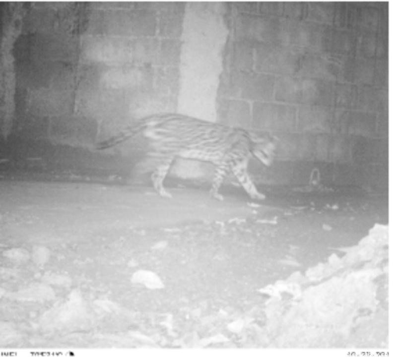 """Costa Rica. Contratos forestales promueven conservación del """"Paso del Jaguar"""""""
