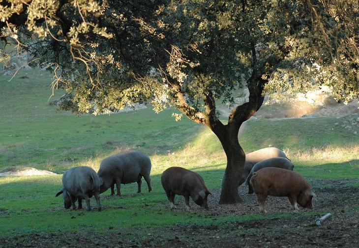 Biobardales, alimentación Ecológica de alta calidad