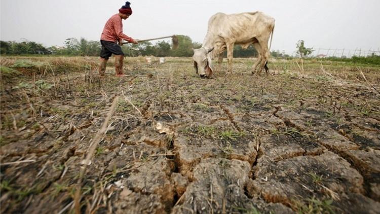 El 33% de los suelos del planeta está de moderada a altamente degradados, según la FAO