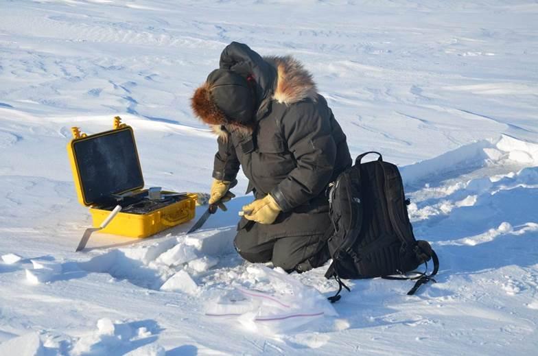 Los microbios del Ártico y la fusión de los glaciares