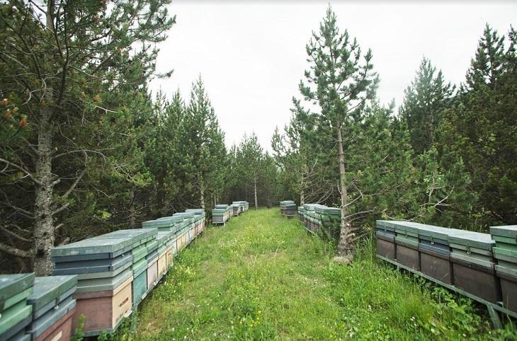 Miel Muria, una miel pura, saludable y ecológica