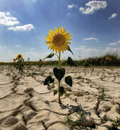 La Generalitat establece 100 medidas para luchar contra el cambio climático