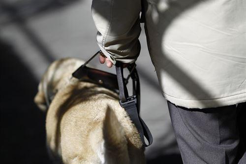 Clamor popular para regular la figura del perro de asistencia en Andalucía