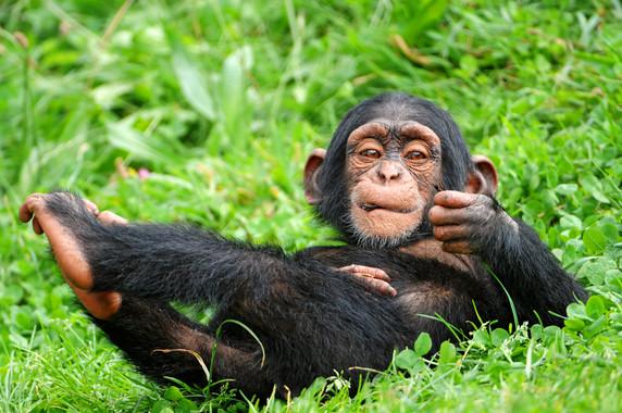 El cerebro es lo que más diferencia a los humanos del resto de primates
