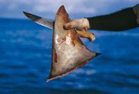 Costumbres frenan campaña en China para proteger a tiburones