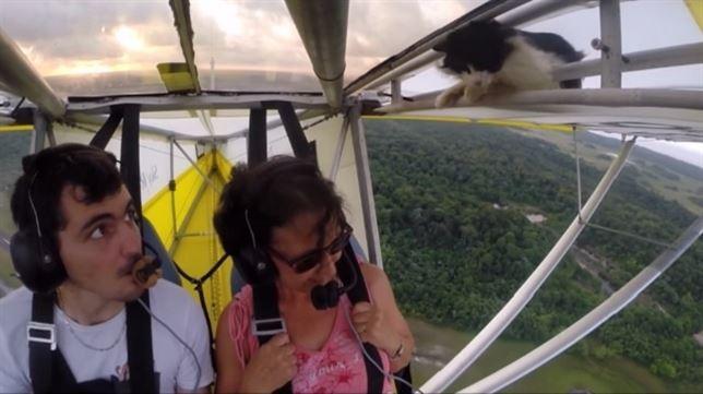 La gata 'voladora' (Ver VIDEO)