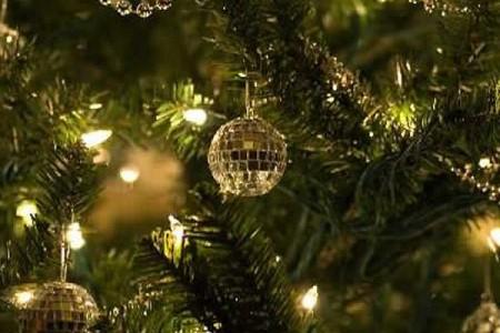 Compra árboles de Navidad naturales
