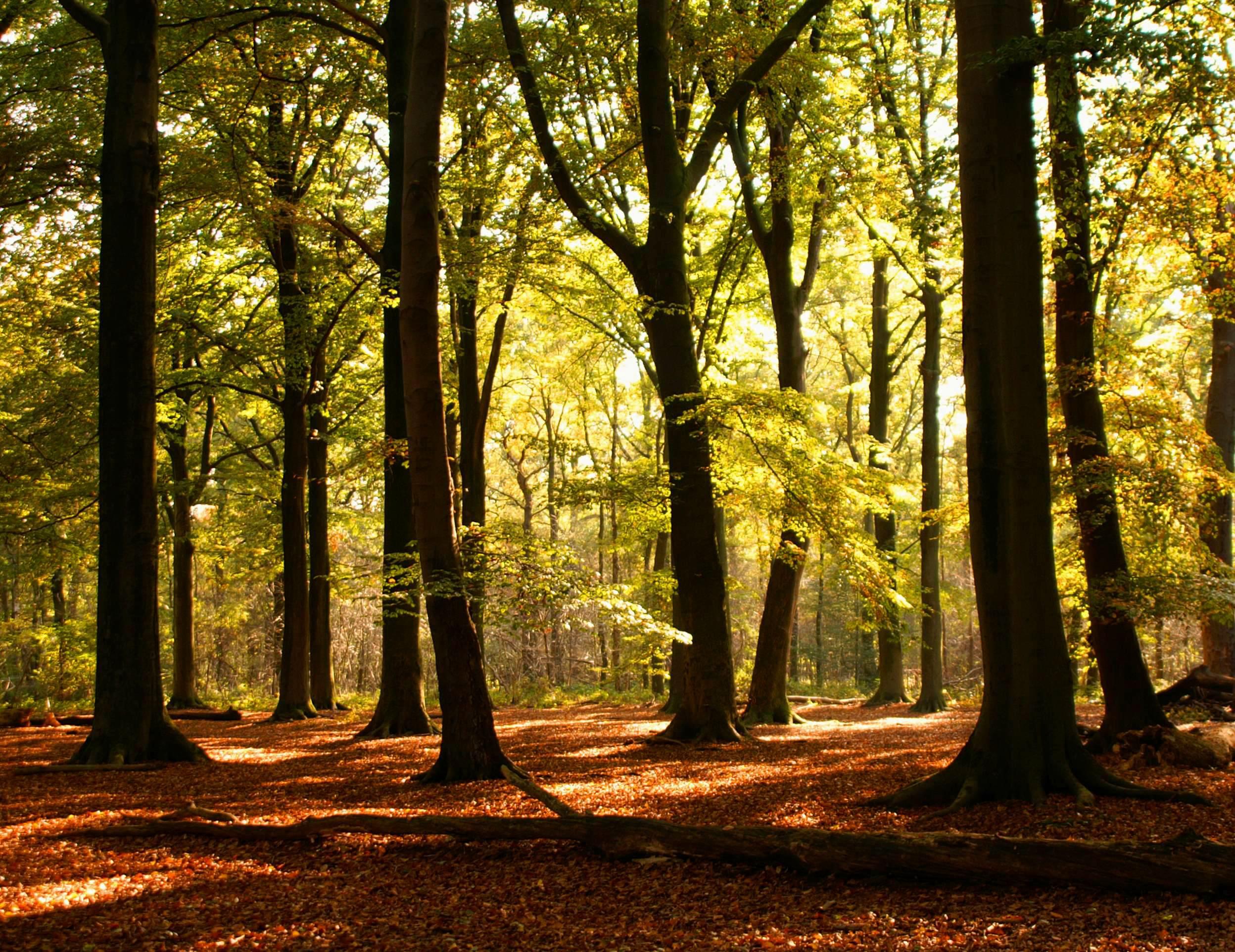 Experto universitario en planificación y conservación de espacios naturales