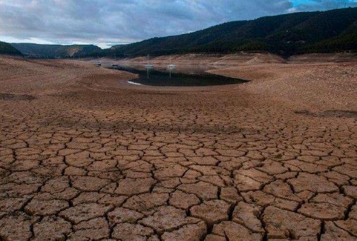 Cambio climático + comercio global = más especies invasoras