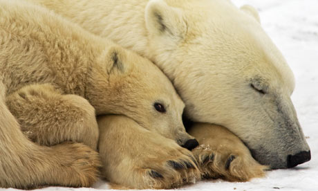 El cambio climático podría modificar comunidades biológicas en zonas polares