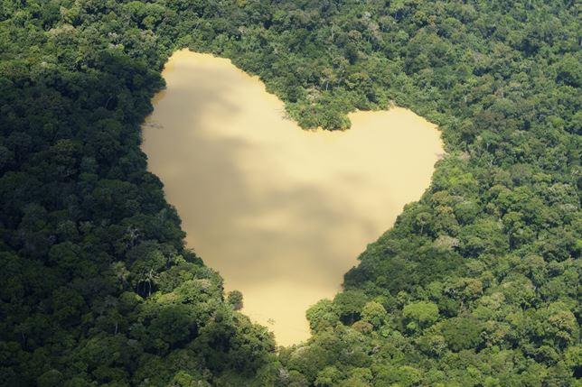 Los árboles tropicales absorben 2.000 millones de toneladas de emisiones de CO2 al año