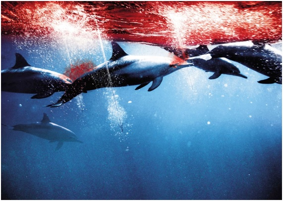 La Cruel Caza de Delfines en Taiji, Japón