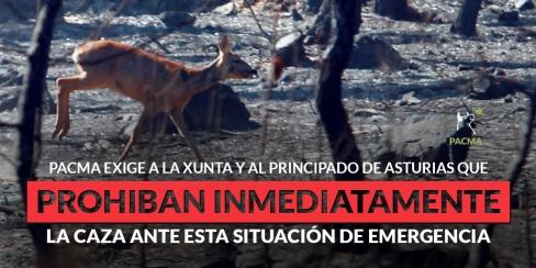 Exigen la paralización inmediata de la caza en Galicia y Asturias