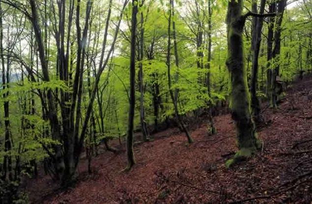 Grupo de Trabajo Bosques Atlánticos