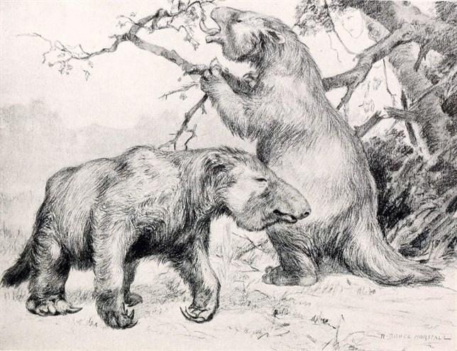 El extinto perezoso gigante era vegetariano