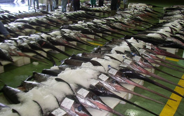 Innovador método español para detectar mercurio en peces