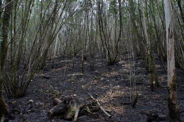 El 'drama' del Parque Natural de Fragas do Eume en Galicia