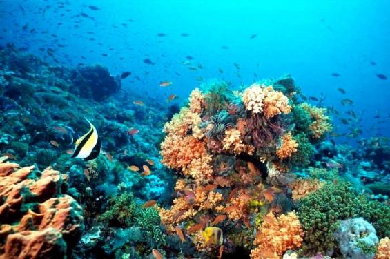 Puerto Rico: Alertan sobre el mal estado de los arrecifes de coral