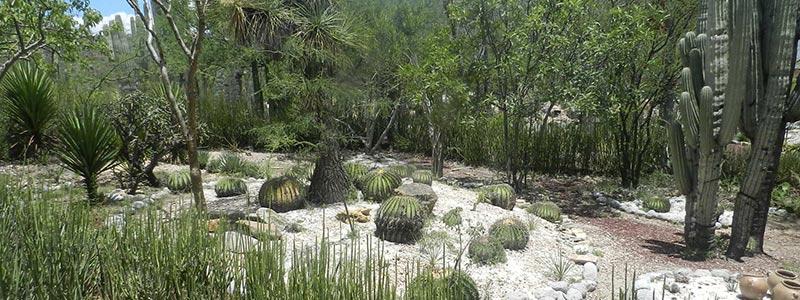 Conoce la Reserva de la Biosfera Tehuacán-Cuicatlán