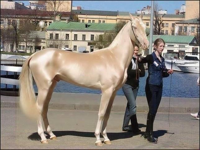 ¿Es 'real' este caballo?