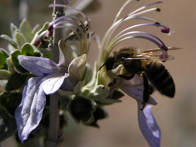Las altas temperaturas y la sequía eleva el número de colmenas perdidas en la provincia de Cádiz