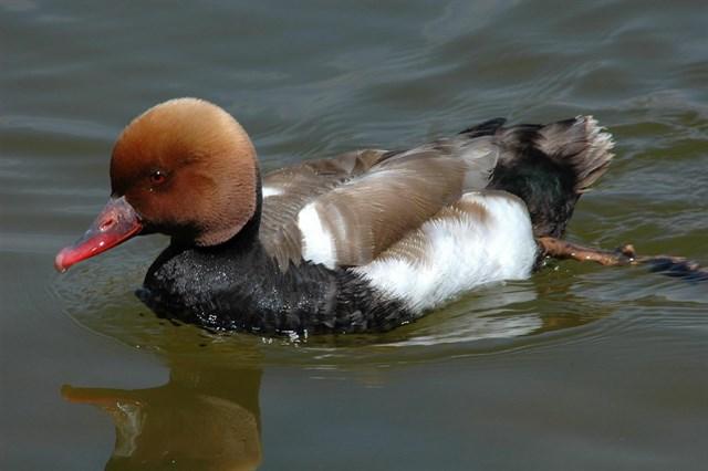 Las aves en España están amenazadas por las aguas residuales