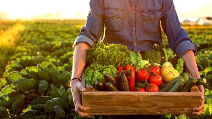 Andalucía líder en agricultura ecológica