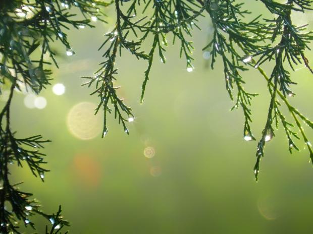 Tu navidad más ecológica 'todos los secretos'