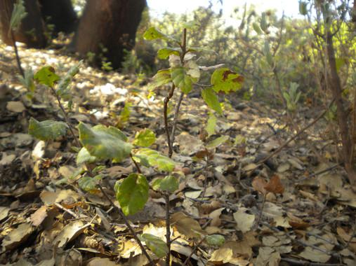 Las plantas se 'adaptan' a la sequía