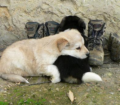 Un portal web español reúne a todas las mascotas abandonadas en un servicio gratuito para su adopción