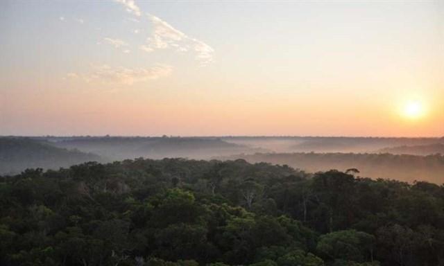 Líderes religiosos se reúnen la próxima semana en Noruega para movilizar al mundo contra la deforestación de los bosques