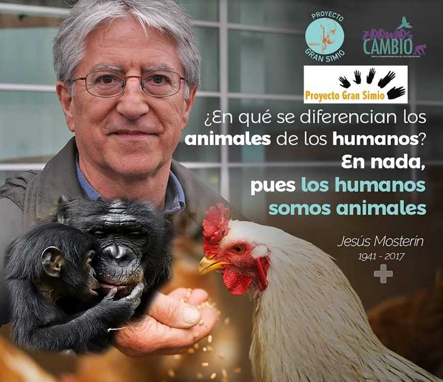 El Presidente Honorífico del Proyecto Gran Simio, Jesús Mosterín murió en la madrugada del día 4 de octubre, precisamente el día mundial de los animales